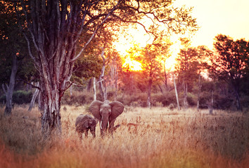 elephants background