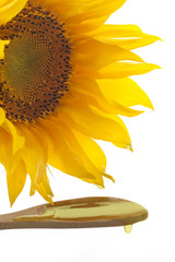 sunflower with pouring oil and yellow blossom concept