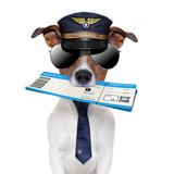 Fototapety boarding pass dog