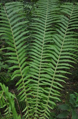The leaves are fern. Texture.