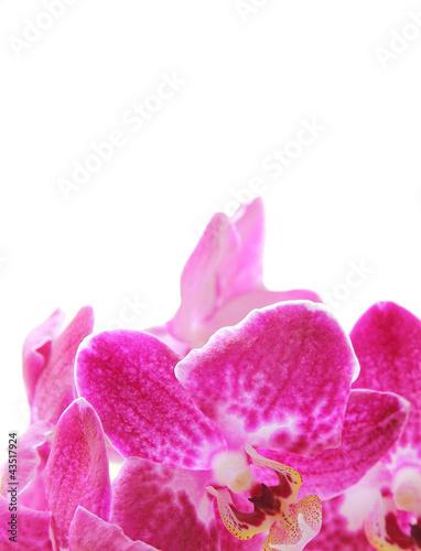 Fototapeten,orchidee,blume,blühen,rosa