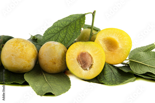 yellow plums on branch with verdigris