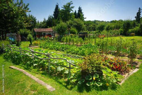 Organiczny ogród warzywny.