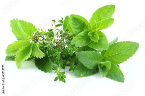 Green herbs