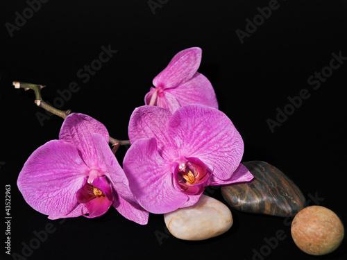 Fototapeten,orchidee,blume,blume,lila