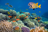 Fototapety Underwater shoot of vivid coral reef with a fishes