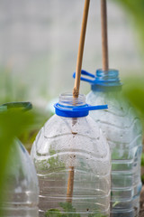 Plastic bottle cloche