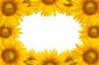Detaily fotografie Sunflower background