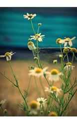 Vernetzt mit Blume