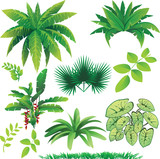 Fototapety plants
