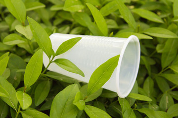 plastic cup on the nature