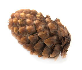 spruce pine cone on white background