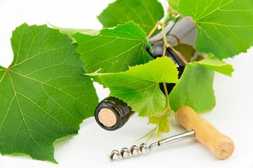 bottiglia di vino con tralcio d'uva