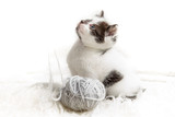 Kitten and a ball of hank poster