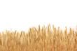 Leinwanddruck Bild - Wheat field