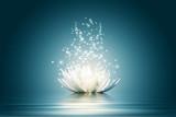 Kwiat lotosu - 43535323