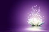 Lotus flower - 43535325