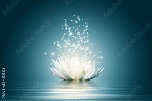 Leinwanddruck Bild Lotus flower