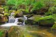 林中的小溪