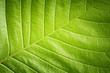 Green leaf closeup background