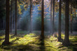 Early sunlight in a dark forest lightens up grass and moss.