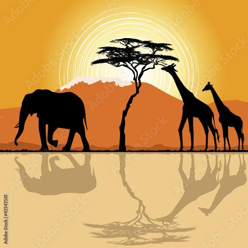 Fototapeten,akazie,afrika,afrikanisch,tier