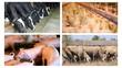 Farm animals split screen