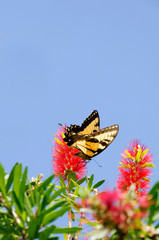 Nectar Garden