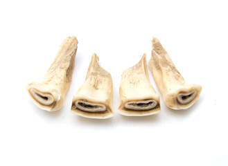 Horse teeth on a white background