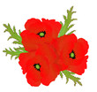 a red poppy flower bouquet isolated