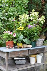 Pflanztisch im Garten mit Blumen