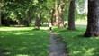 Woman jogging in the park, slow motion