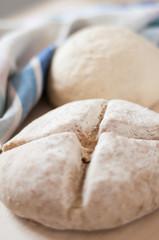 dough _ pasta con lievito madre