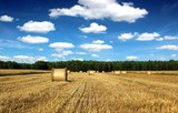 Fototapety beautiful countryside landscape sheaves and field