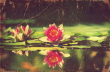 Waterlily in pond .Vintage flowers card on old paper