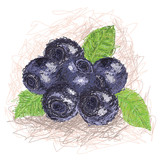 blueberry fruit.