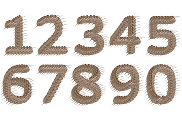 Dried leaf number alphabet character.
