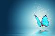butterfly - 43565595