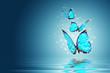 butterfly - 43565598