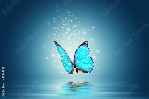 butterfly - 43565593