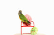 Parrot standing on a mini chair