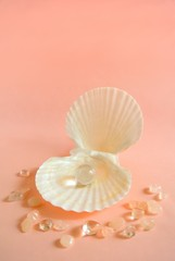 貝殻と宝石