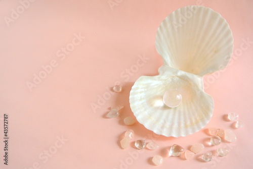 貝殻と宝石 - 43572787