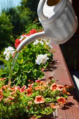 Bunte Blumen gießen