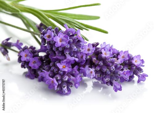 Fotobehang Lilac lavender flower isolated