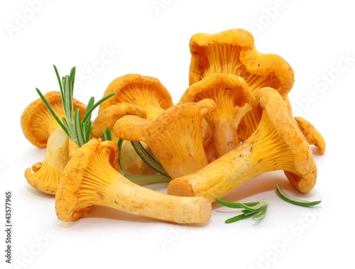 Leinwanddruck Bild Pilze, Rosmarin