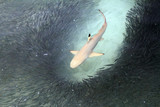 Fototapete Maldives - Fisch - Fische