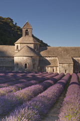 Lavender field at the abbey of Senanque in Provence