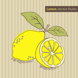 Hand drawn lemon. Vector illustration