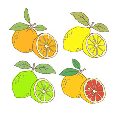 Hand drawn citrus set. Vector illustration